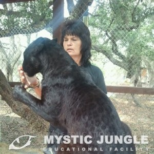 About Us - Mystic Jungle Educational Facility
